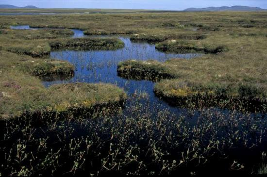 Photograph of Caithness & Sutherland Peatland Becomes New National Nature Reserve
