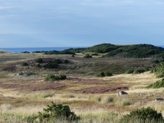 Photograph of Portskerra Plots